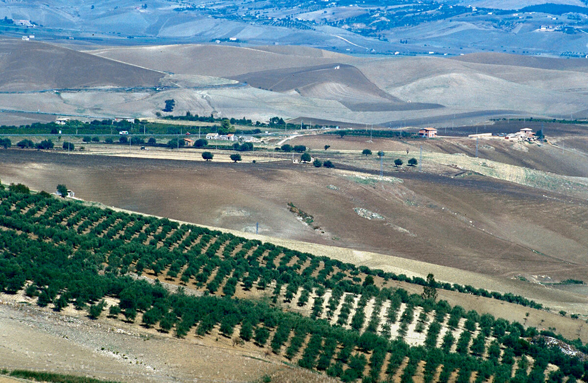 Agricultural Landscape close to Caltanisetta
